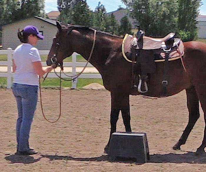 Getting Your Horse To Stand Still For Mounting