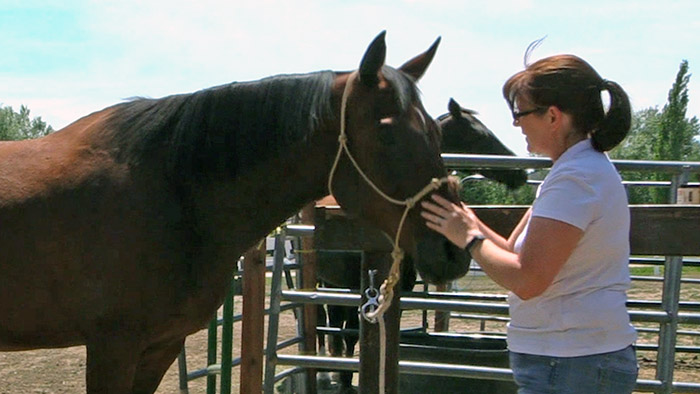 Quality Time With Your Horse