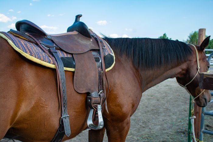 synthetic vs. leather saddles
