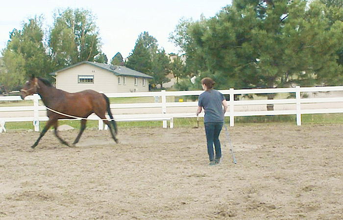 Why You Should Lunge Your Horse Before You Ride
