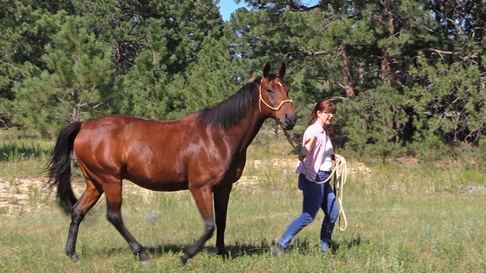 a woman walking a tall horse