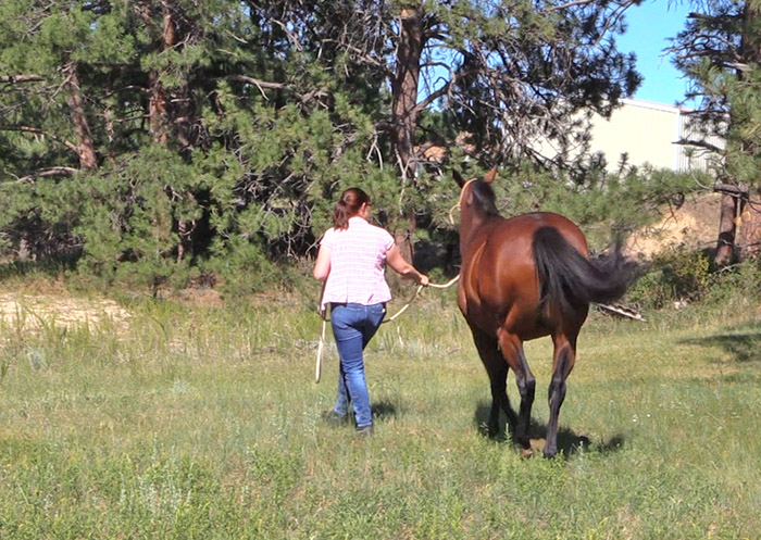 Tlessons learned from my first horse show