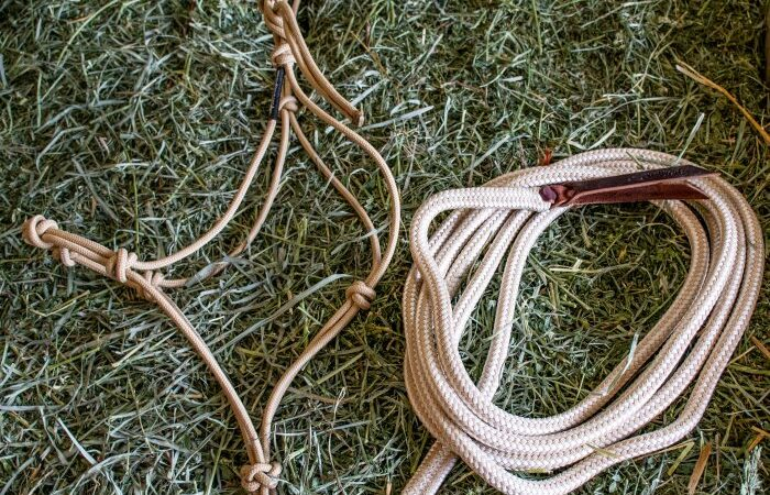 My Favorite Equestrian Items I bought on Amazon