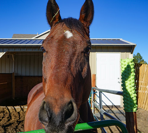 using hay nets for horses