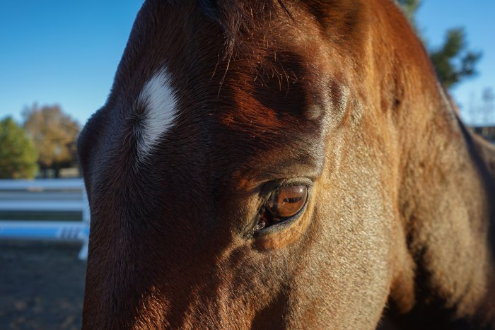 How To Take Epic Photos Of Your Horse