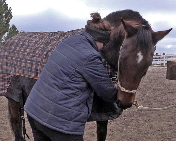 Finding Affordable Horse Blankets