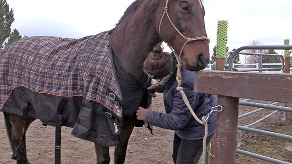 I Bought My Horse Underwear
