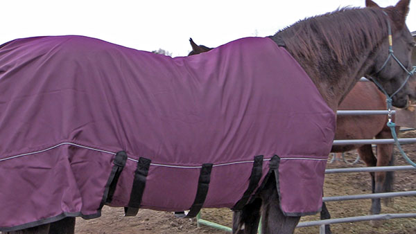 Finding Affordable Horse Blankets