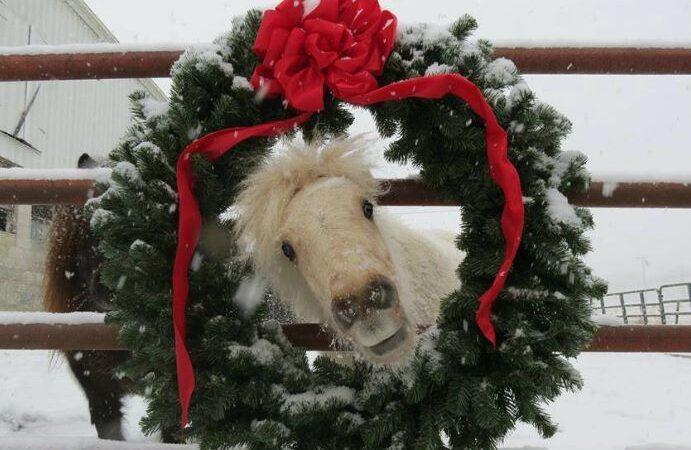 best winter gear for equestrians