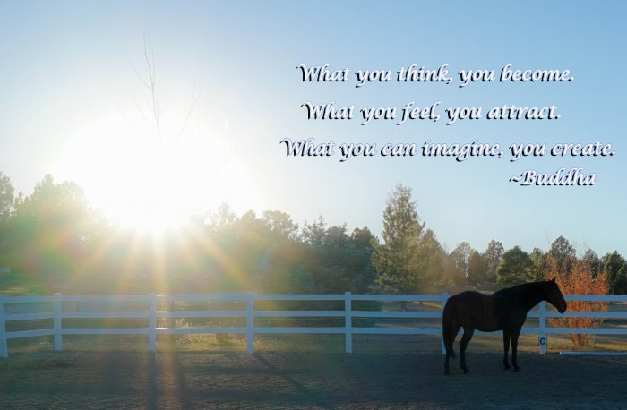 a silhouette of a horse in a pasture