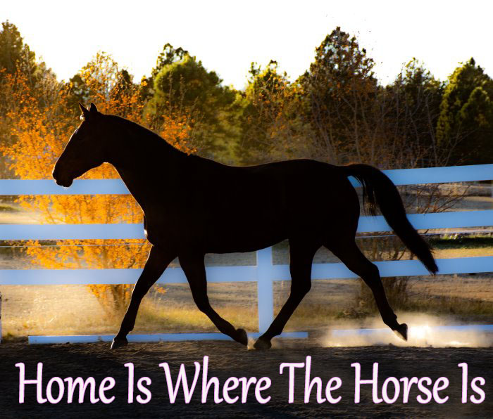 a silhouetted horse trotting in an arena