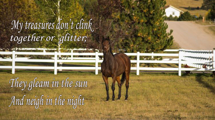 a horse standing in a pasture in the fall