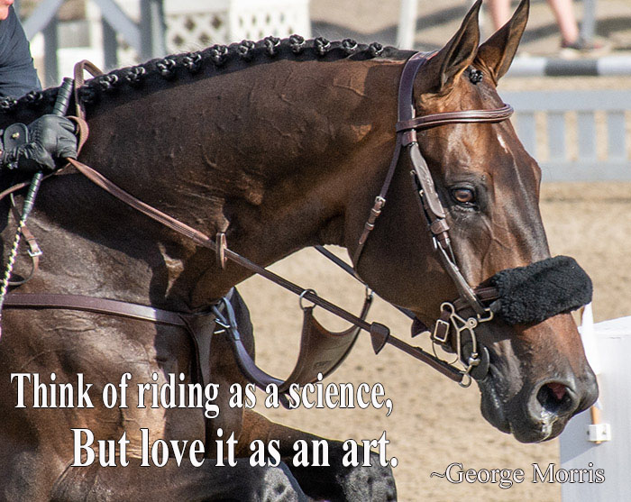 A horse in an English bridle