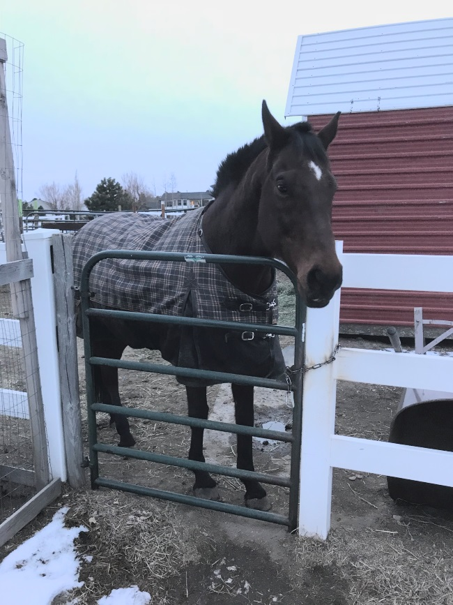 a horse standing by a gate with a blanket on