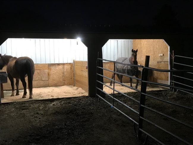 horses in an open barn