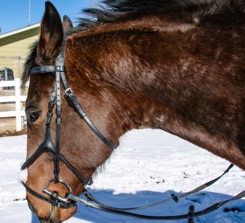 a horse in a figure eight jumper bridle