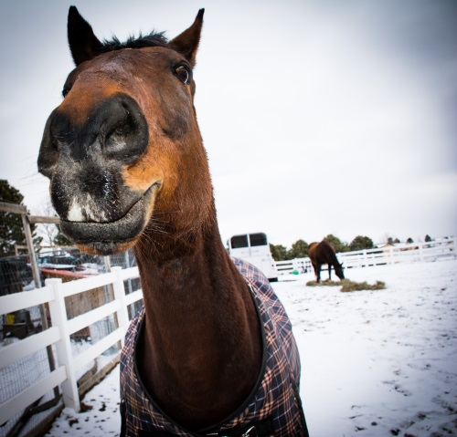 a horse smiling for the camera