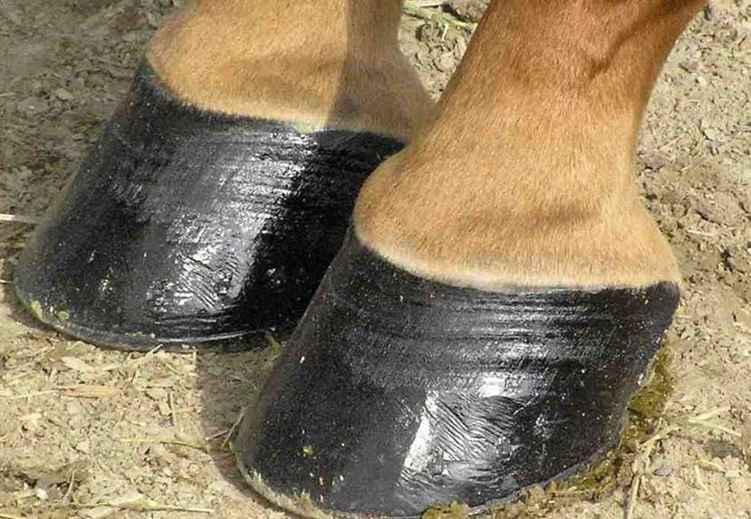 close up of a pair of horse hooves