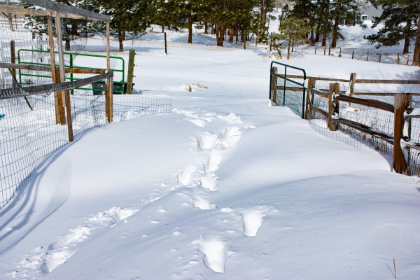snow drifts with foot prints in them