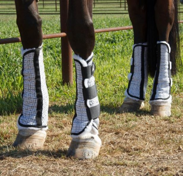 a horse wearing mesh fly leg wraps