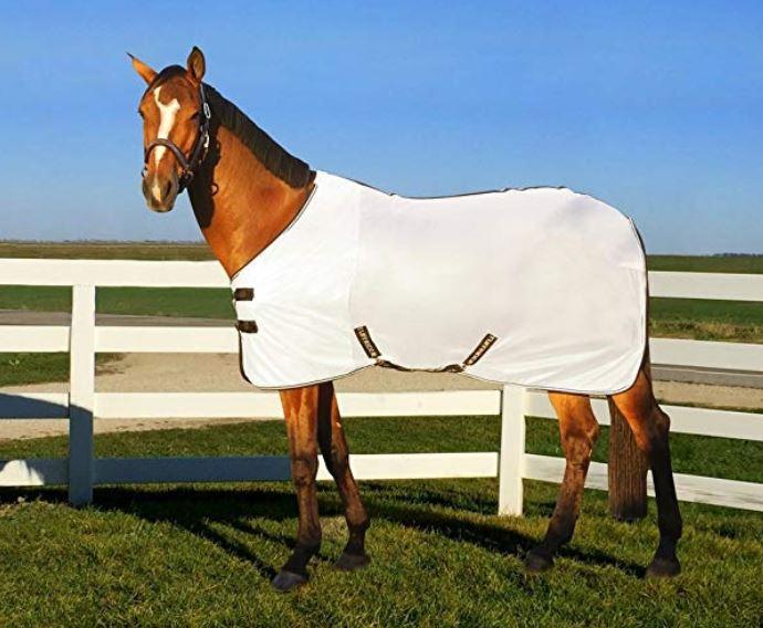 a horse wearing a fly sheet