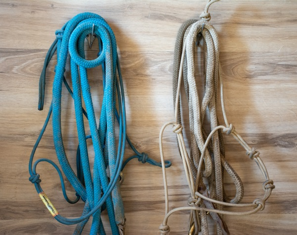 horse halters hanging up on a wall