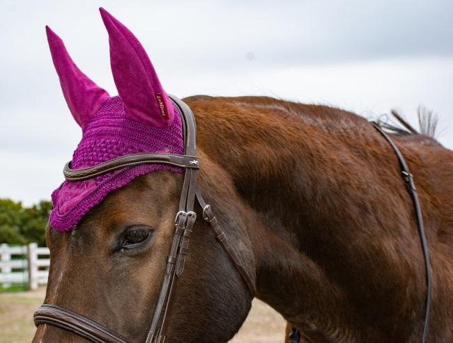 a horse wearing an ear bonnet in plum color
