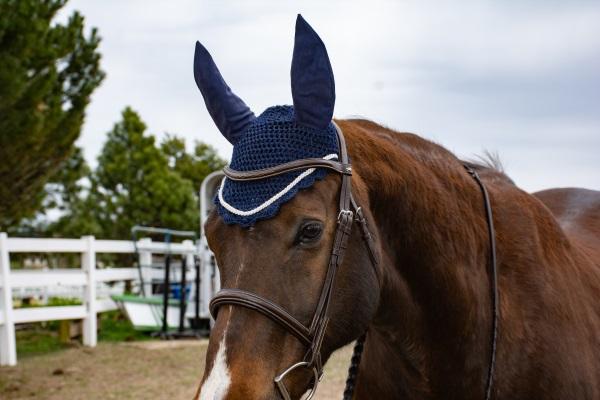 a horse wearing a navy blue fly bonnet