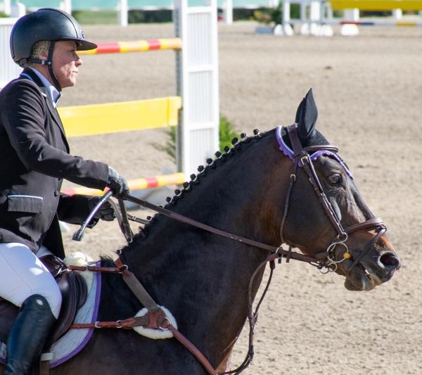 a jumper horse wearing a black ear bonnet