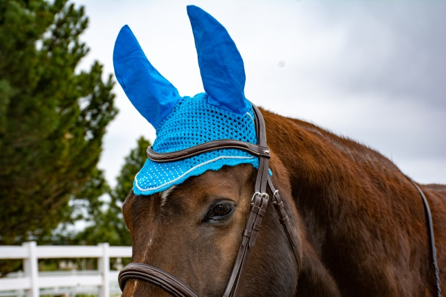 turquoise ear bonnet on a horse