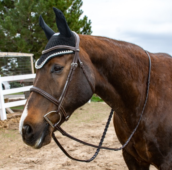 black equine couture ear bonnet on a horse