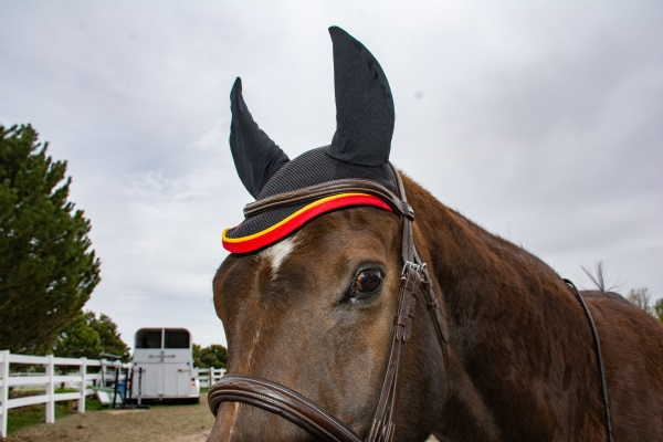 a horse wearing an ear bonnet