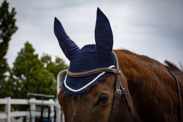 My horse wearing an ear bonnet