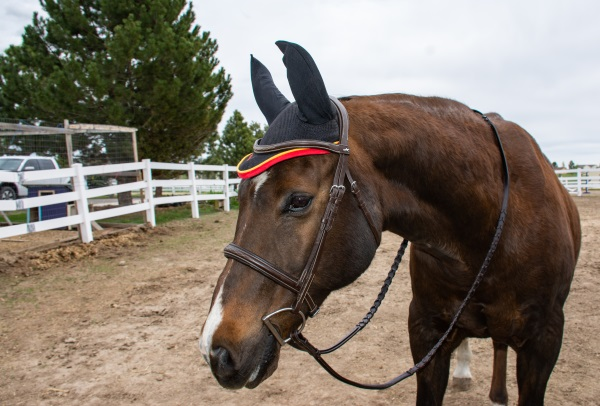 Rambo ear bonnet in black on a horse
