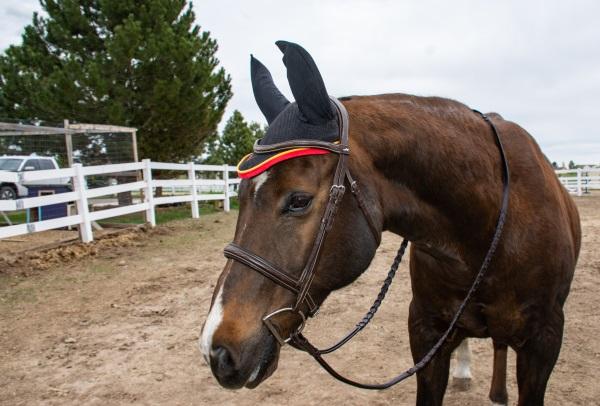 Rambo ear bonnet in black on a horse