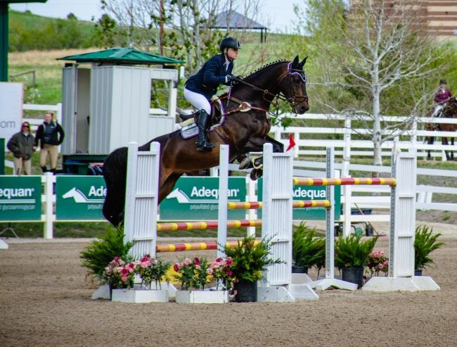 grand prix jumper at the Colorado Horse park