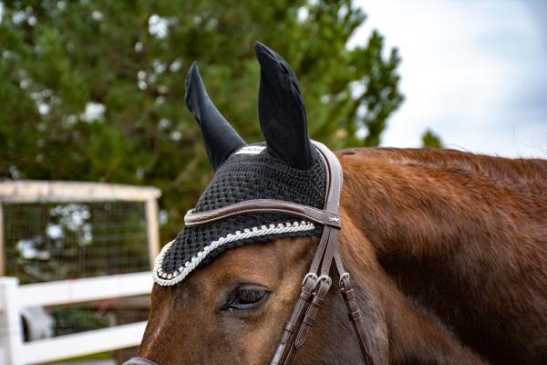 a horse wearing an ear bonnet