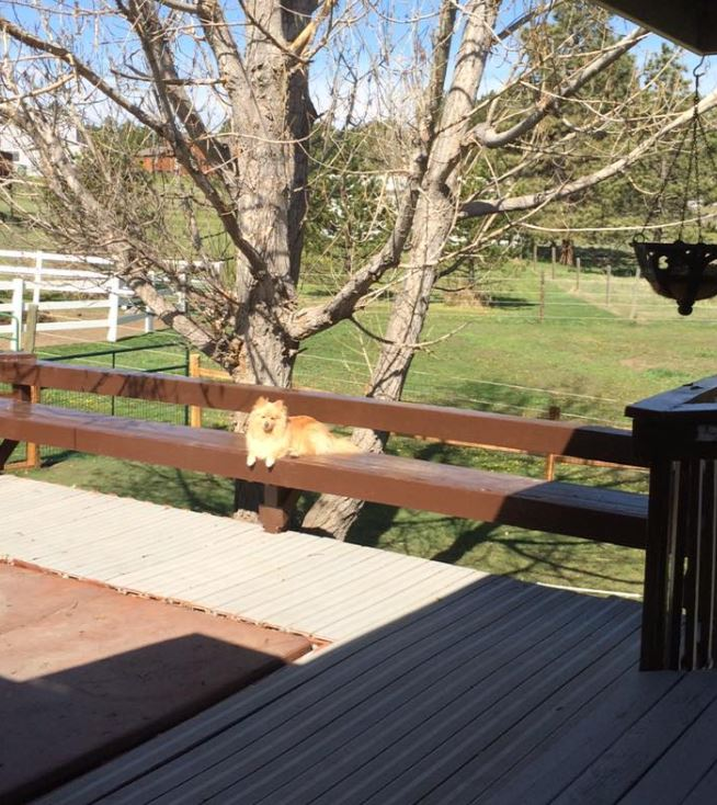 back porch and a dog sitting on a seating portion