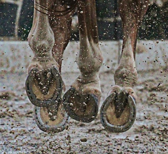 horse shoes on a horse