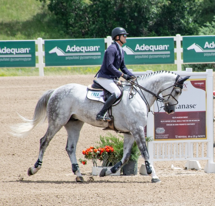 a dapple gray horse with rider