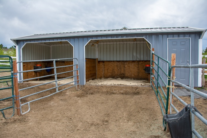 a small horse run in shed