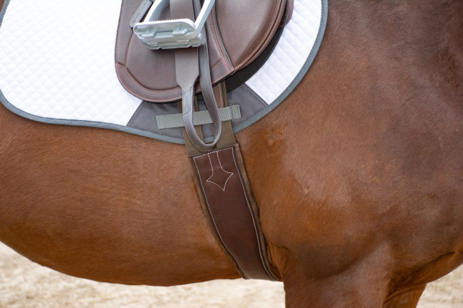 close up of a girth on a horse