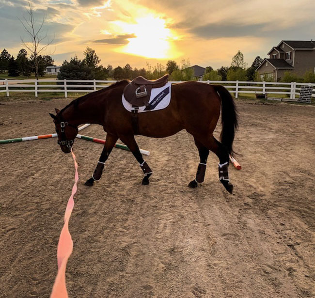 Real Riding Challenge – Week 4