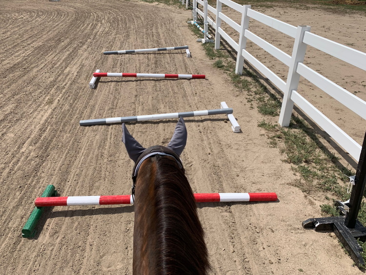 Real Riding Challenge Day 18 More Ground Pole Work