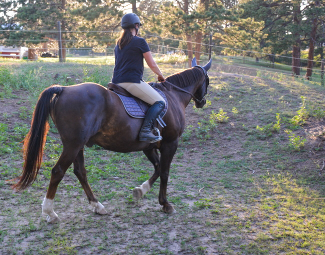 How To Balance Horses With A Busy Life