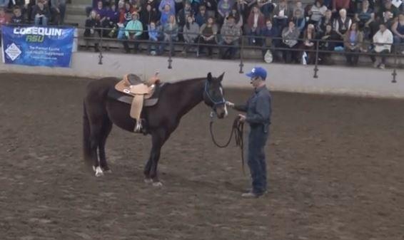 art of the horseman fair