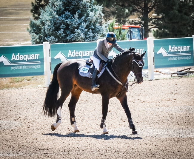 Grand Prix at the Colorado Horse Park