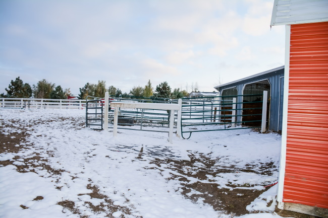 Preparing For Winter Time Horse Care