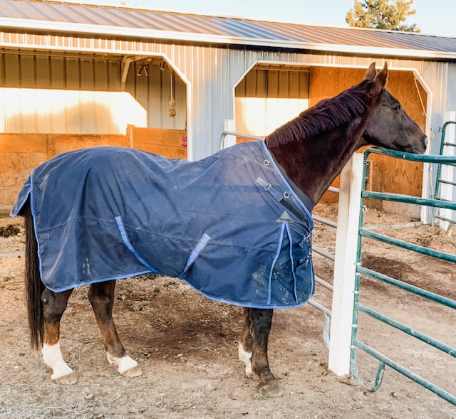 5 Benefits of Blanketing Your Horse This Winter