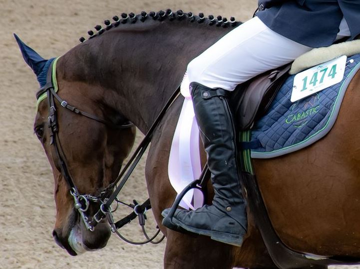 New Rules On Spectators At Horse Shows This Summer